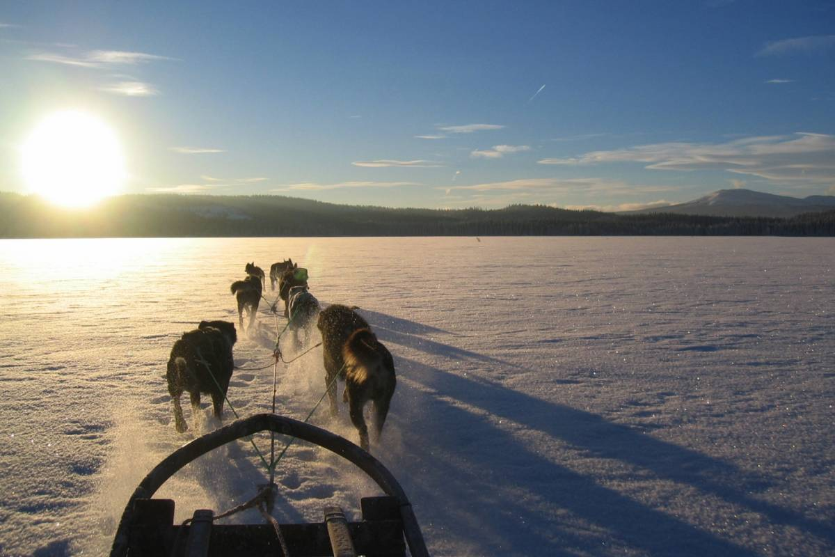 Puls Camp Åre Dog Sledding