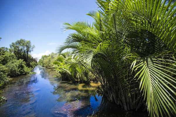 Authentic Mekong Delta Day Tour by Speedboat