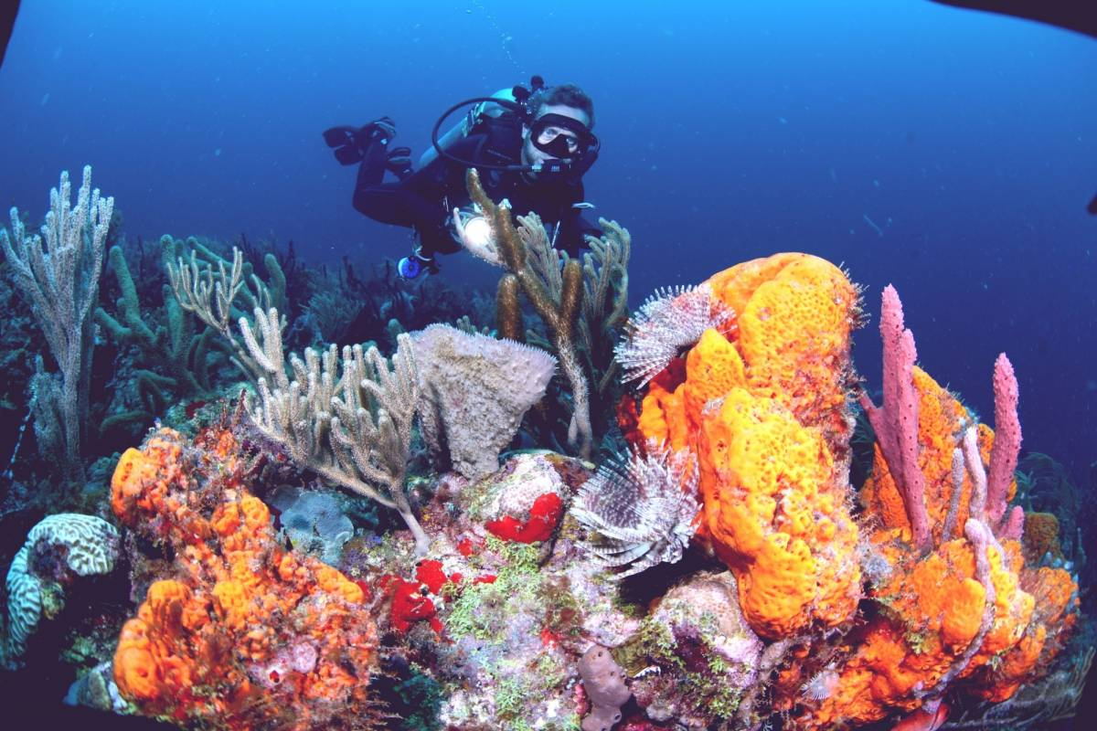 Aquanauts Grenada Premium Valet Package + 2 Tank Morning Boat Trip (2 Persons)