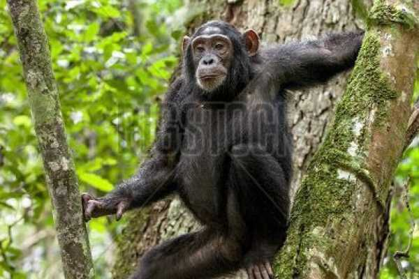 4 Day private safari + chimp tracking
