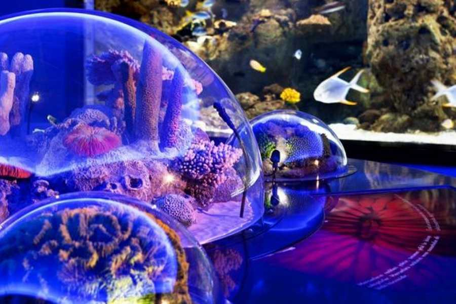 BarefootPlus Travel Istanbul Full Day Tour - Aquarium Fun & Shopping