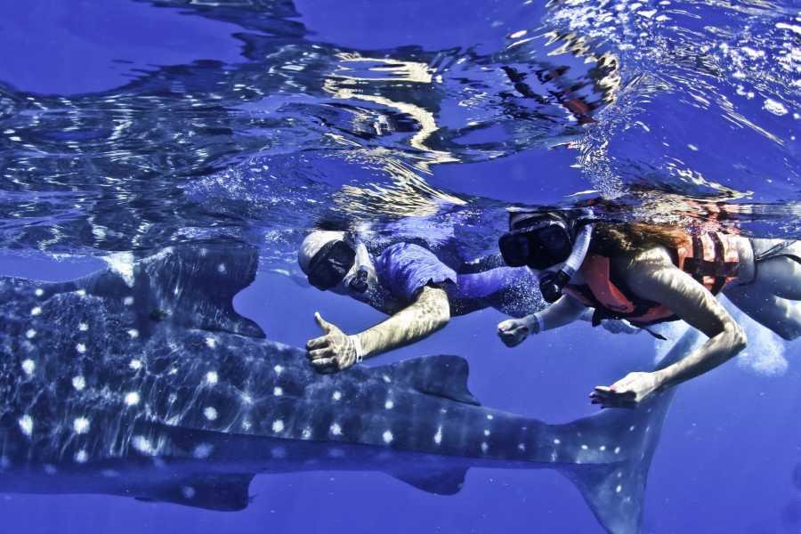 VIAJERO MEXICO Schnorchelausflug Walhai beobachten