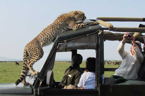 10 Day Safari to Discover the Pearl of Africal