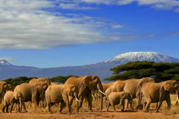 12 Days Kenya/Tanzania Great Safari