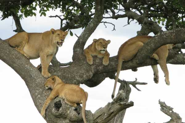 10 Days Special Tanzania Safari