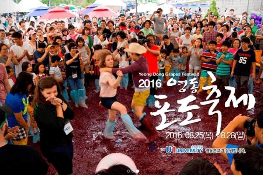 Kim's Travel Yeong Dong Grapes Festival
