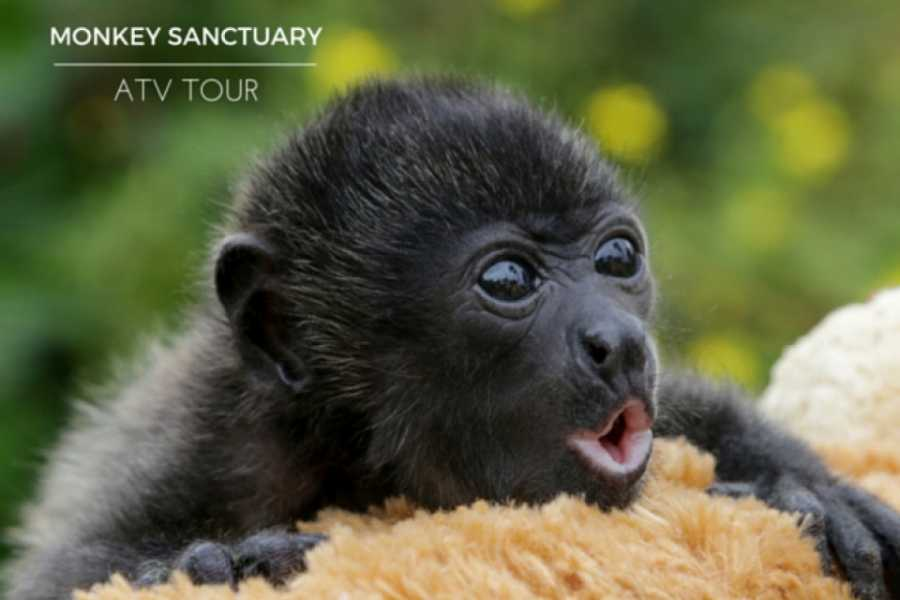 Kelly's Costa Rica ATV Monkey Sanctuary