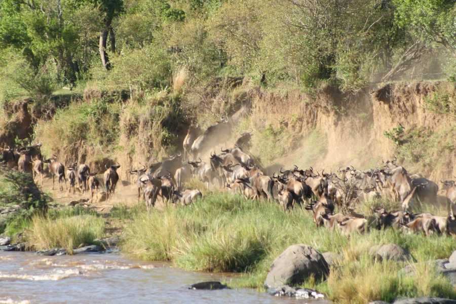 BOOKINGAFRICA.NET Masai Mara - Wildebeest Migration Special
