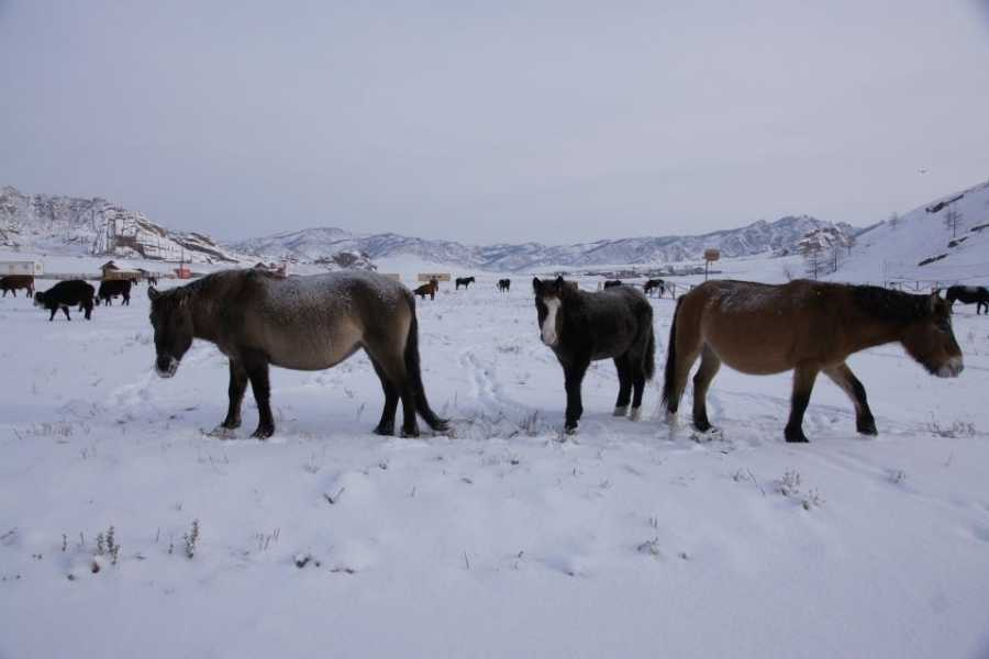Mongolia Goes Global Kharkhorin weekly tour in winter