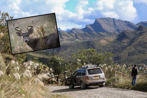 Andes Ecotours Chingaza Páramo Adventure