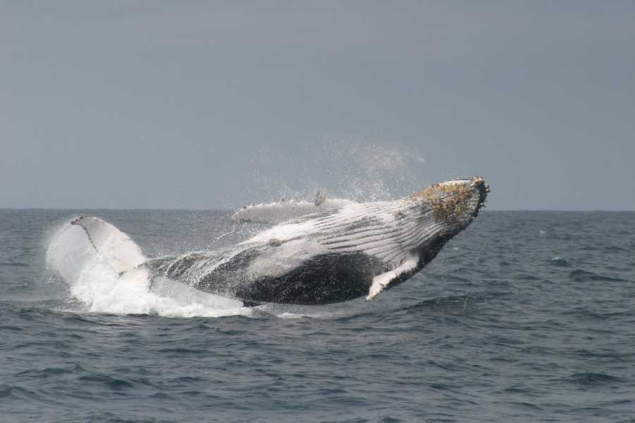 PALO SANTO TRAVEL WHALE WATCHING | SNORKEL FROM PUERTO LOPEZ IN ECUADOR