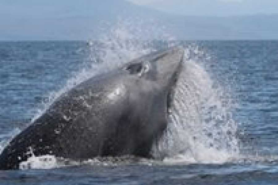 Hebridean Whale Cruises 2.5 hour Whales and Wildlife Tour, from Gairloch