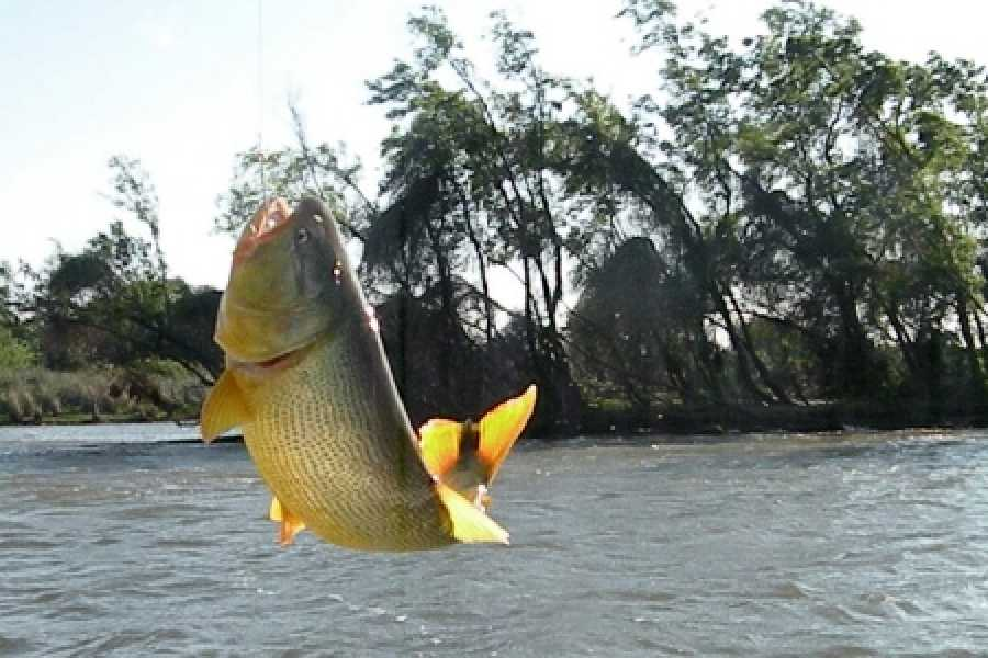 Check Point Pesca Esportiva em Foz do Iguaçu