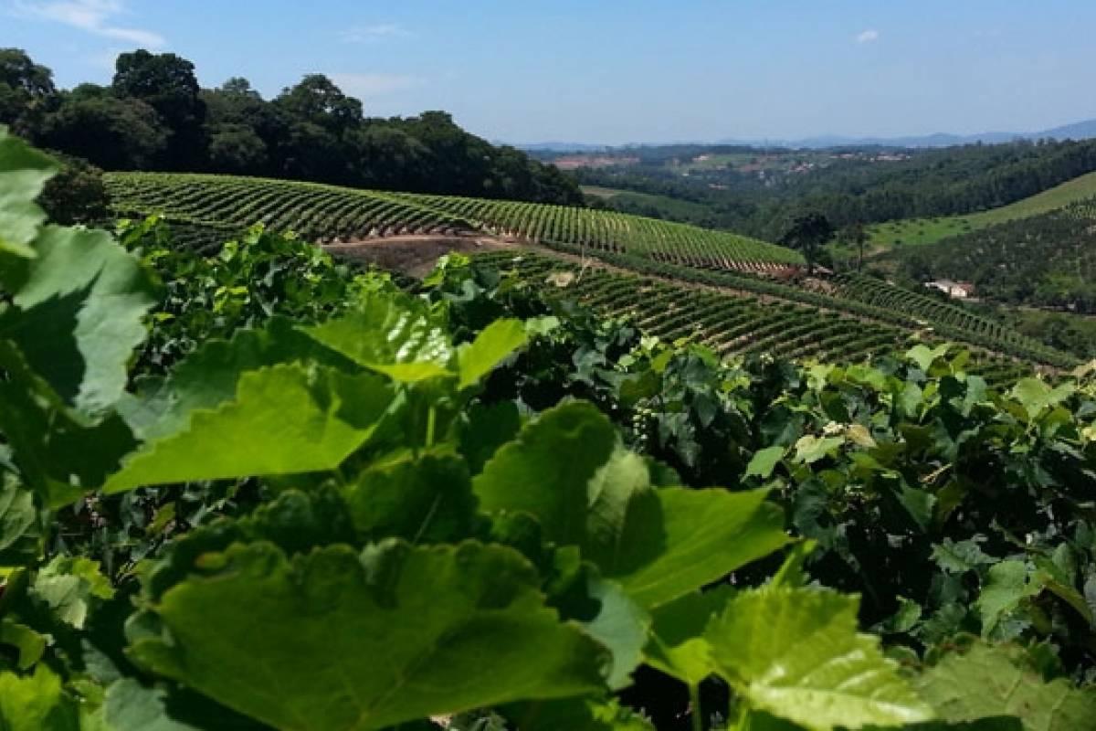 Check Point Agroturismo: Jundiaí - Uva e Vinho