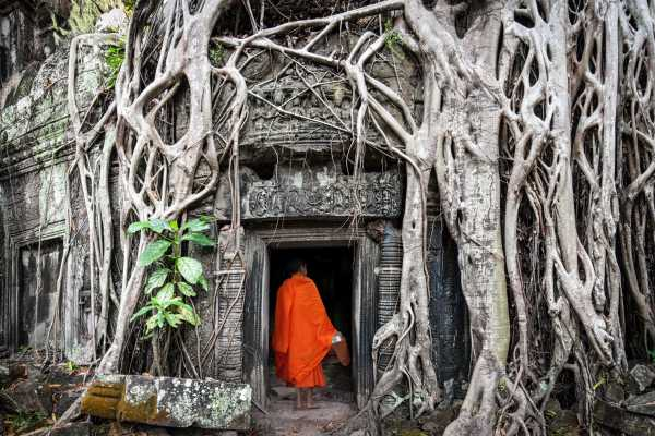 12 Day Cambodia Monkey Ladder