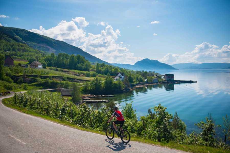 Norway Insight Hardangerfjorden fra sykkelsetet