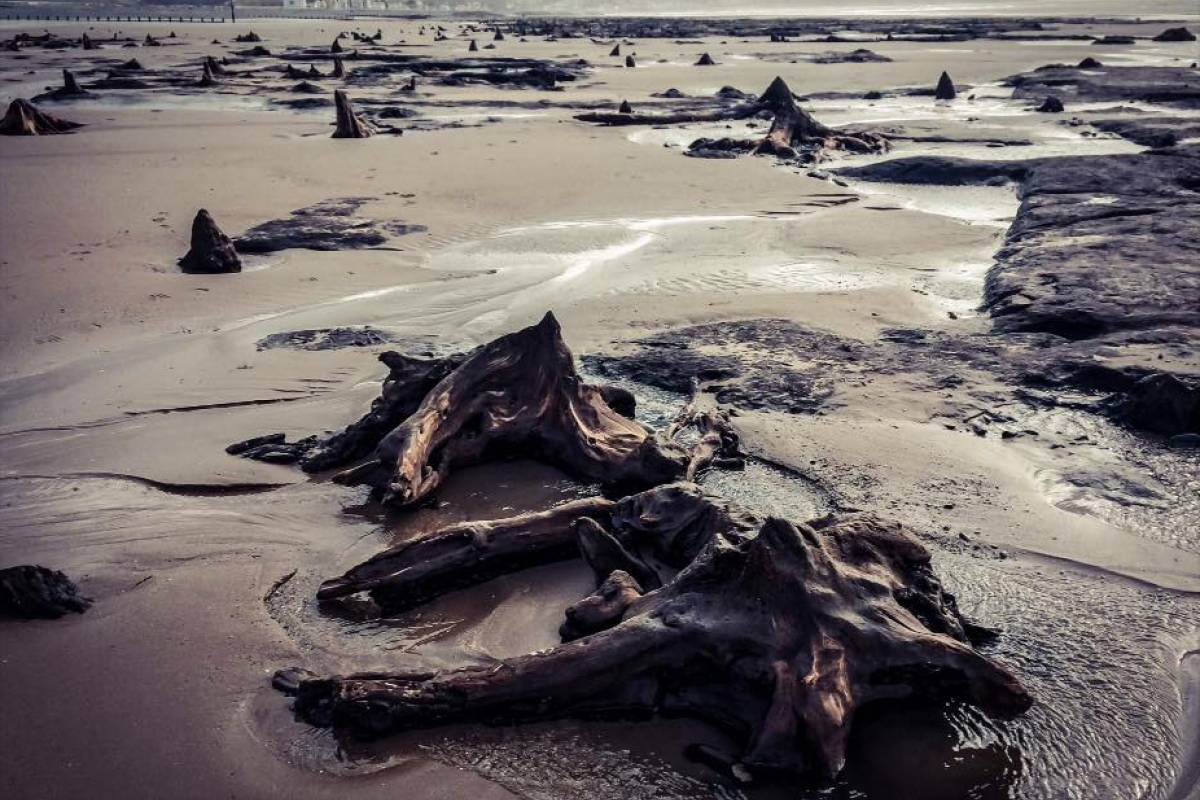 Cambria Tours Uncover your own legend - The Art and Science of the Submerged Forest