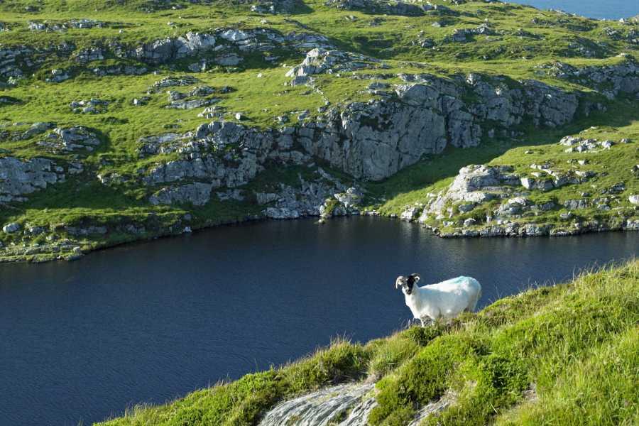 The Irish Experience 3 Day Adventure Tour – Wild Wexford & Wicklow
