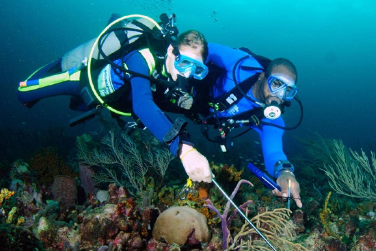 Aquanauts Grenada SGU Discover Scuba Dive