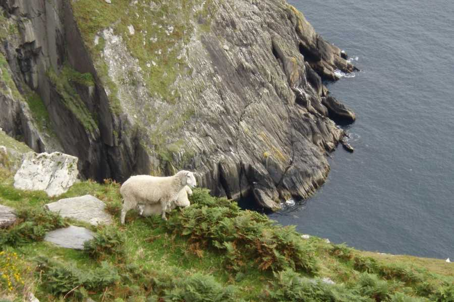 Wild N Happy Group Ltd PRIVATE TOUR- Dingle and Slea Head Day Tour