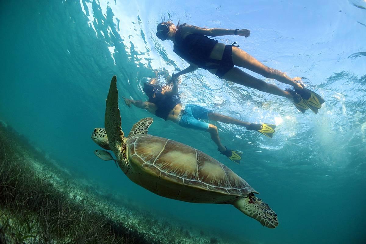 Cancun Vacation Experts MUNDO MARINO