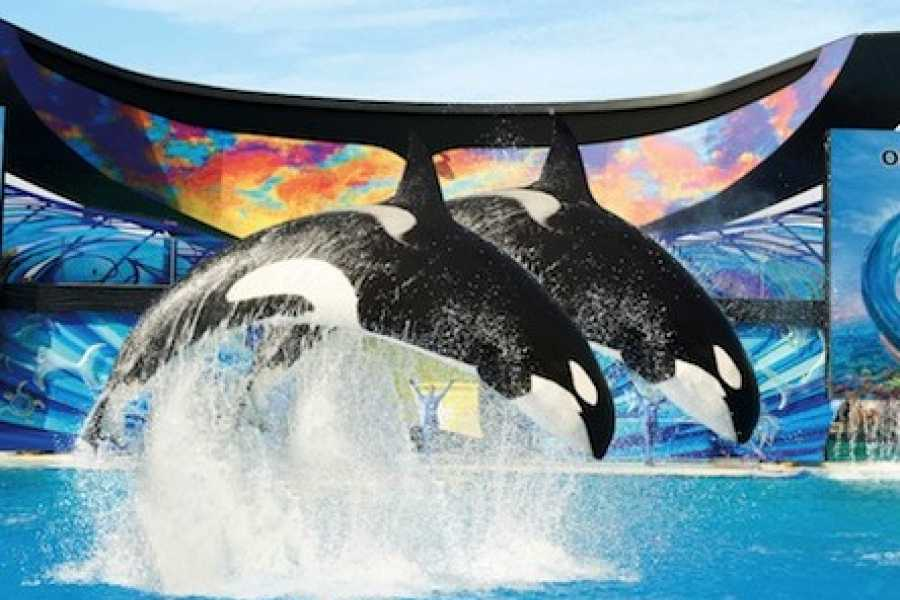 Dream Vacation Builders Round Trip Transfer to Sea World San Diego Tour #3A