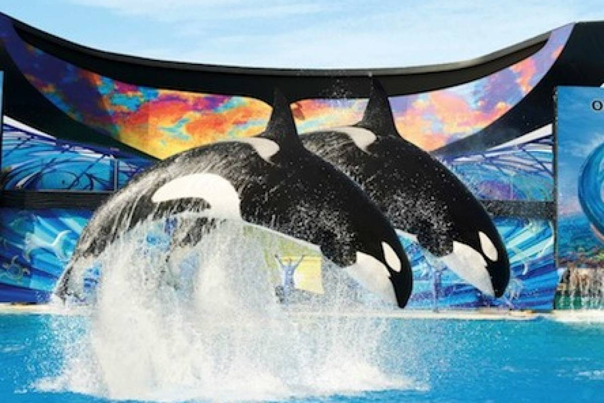 Dream Vacation Builders Round Trip Transfer to Sea World San Diego from L.A.