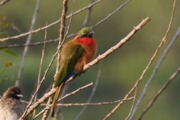 19 Days Birding Safari and Wildlife Tour