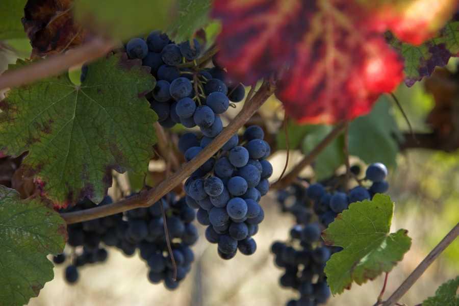 The Italian Tours Piave wine tasting tour - PD05