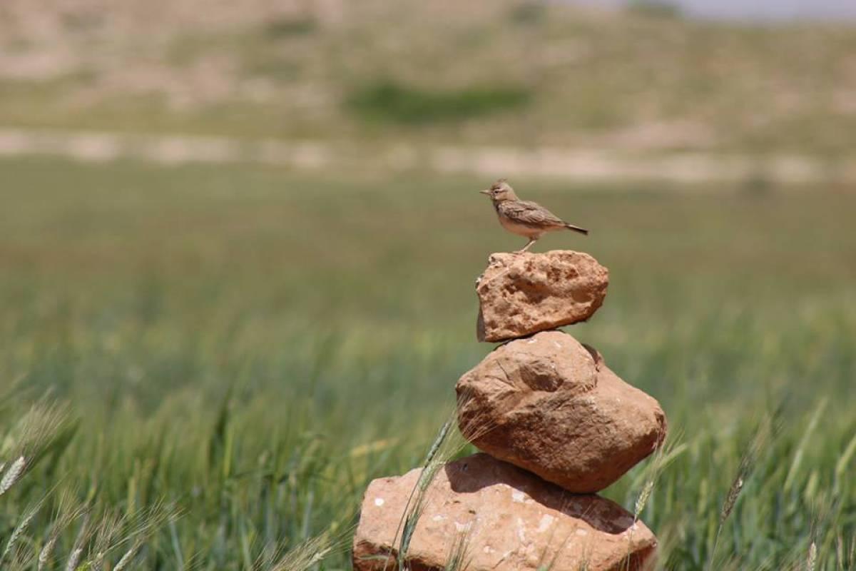 Siraj Center 2 June 2017, Friday. Battir Hike & Bird Watching