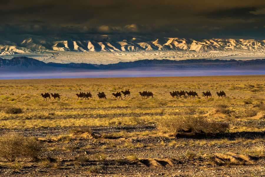 The Great Mongolian Adventures Gobi Expedition 10 days