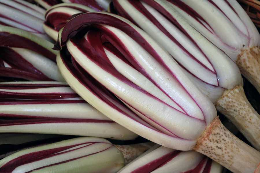 The Italian Tours 01 Do you know Treviso Red Radicchio? - VE12