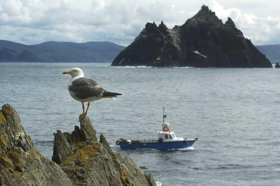 Wild N Happy Group Ltd Skellig Island Eco Boat Tour