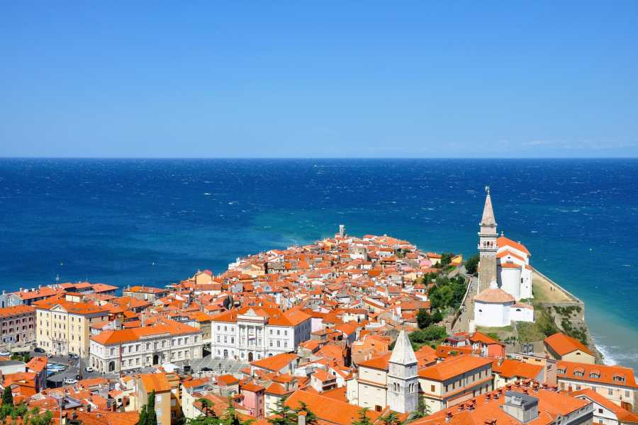 ToDoInSlovenia, brand of Kompas d.d. Lipica & Coastal City of Piran - Touch of Karst & the Mediterranean