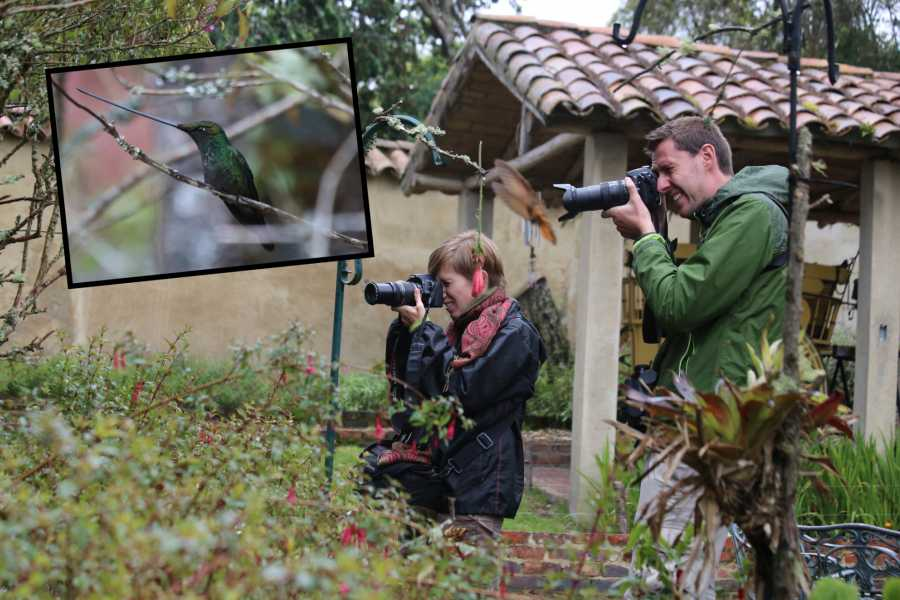 Andes Ecotours Hummingbird Photography & Birdwatching