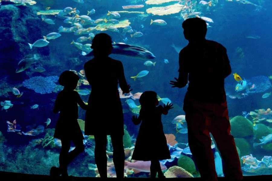Tours & Tickets Operador Turístico Veracruz Aquarium Tickets