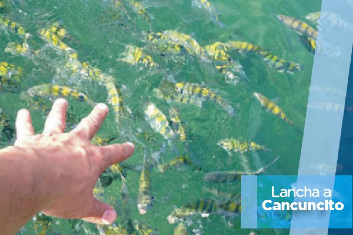 Tours & Tickets Operador Turístico Lancha a Cancuncito