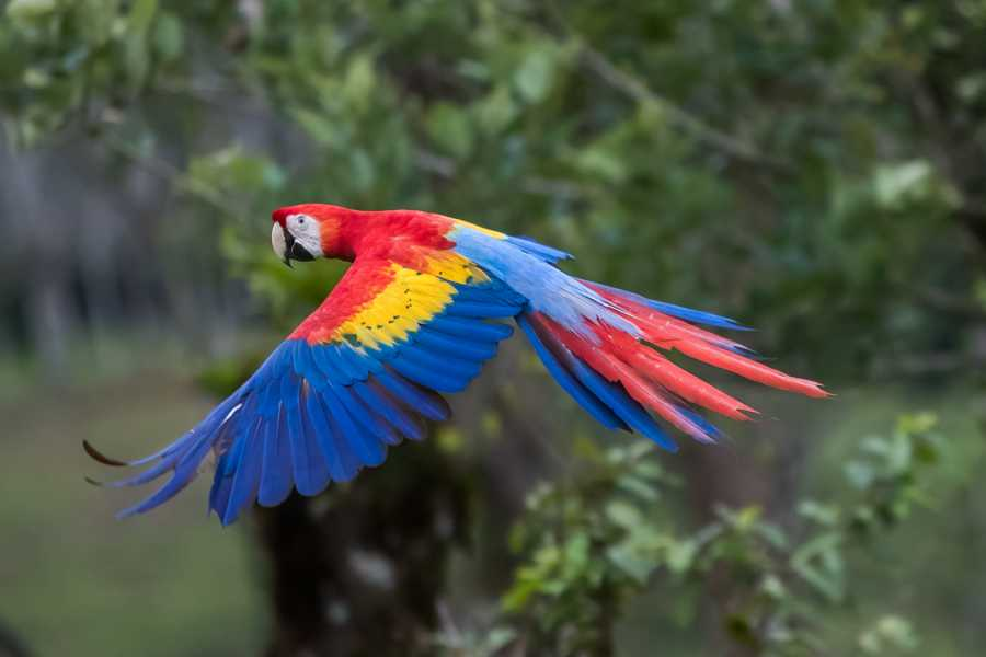 Krain Concierges Coffee Plantation & Macaw Haven