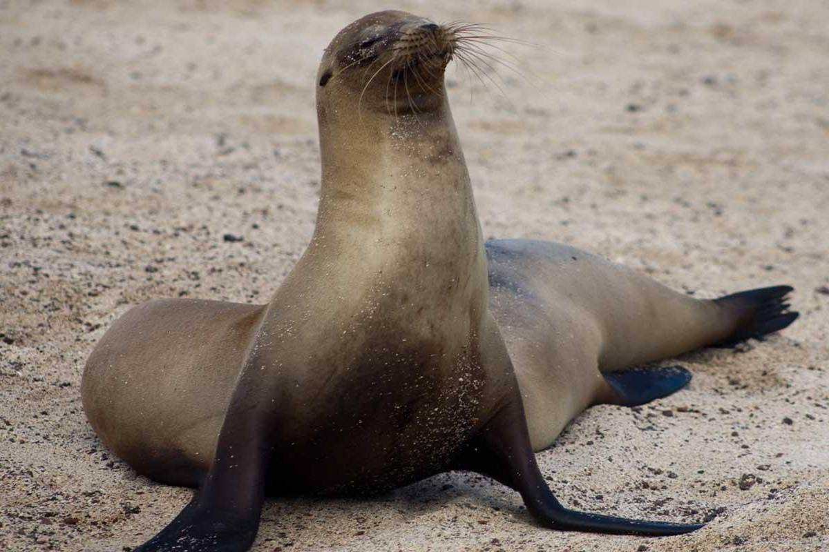 Gray Line Ecuador Classic Galapagos
