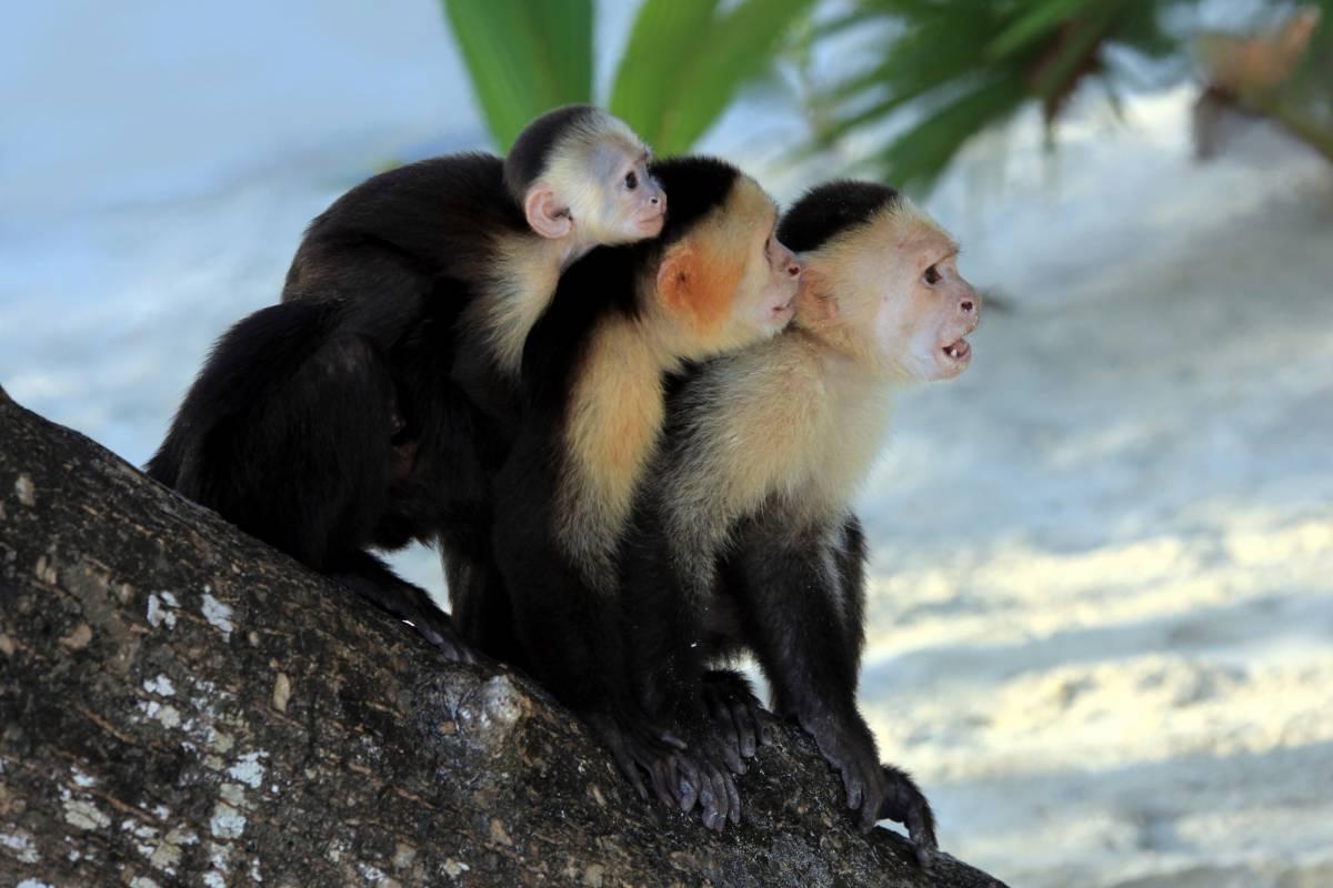 Tour Guanacaste ATV+Zip-Line+Monkey Sanctuary Combo Tour