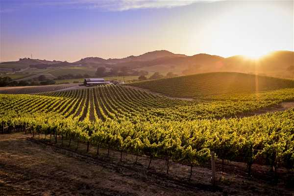 Southern California Ticket & Tour Center Redwoods & Wine Country Escape