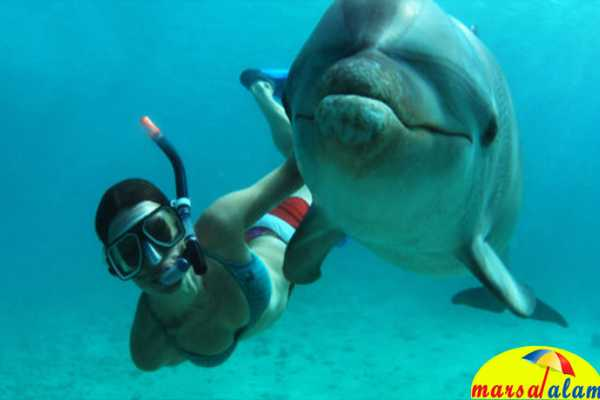 Marsa alam tours Snorkeling Trip Dolphin Reef from  Marsa alam