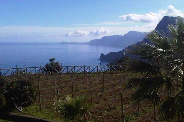 Nature Meetings Madeira Combo Expedition - Jeep Safari & Walking Tour HD