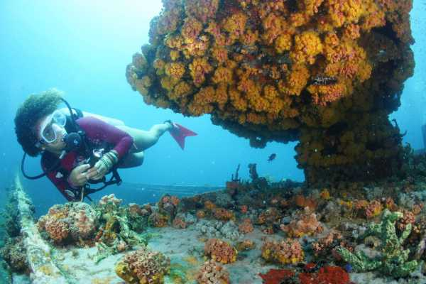 Aquanauts Grenada Morning Scuba Packages