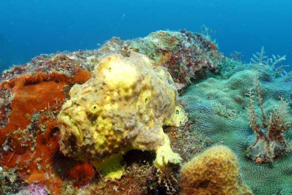 Aquanauts Grenada All day dive Package Incl Gear