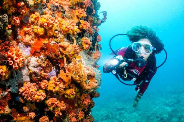 Aquanauts Grenada Womens Dive Day Door Prize- companion Special Package