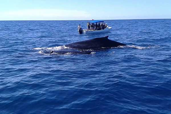Uvita Information Center Whale and Dolphin Watching Tour