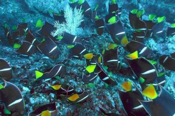 Uvita Information Center Caño Island from Sierpe - Snorkeling full day tour
