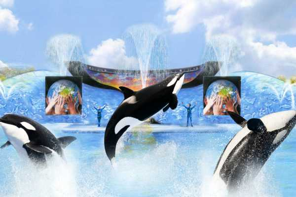 "Dream Vacation Builders SeaWorld San Diego ""Eat Free' Single Day with All Day Dining w/ Transfers (ANA) Tour #3B"