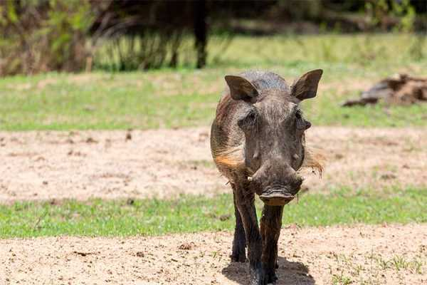 e-Tourism t/a SimplyTravel Gaborone Game Reserve